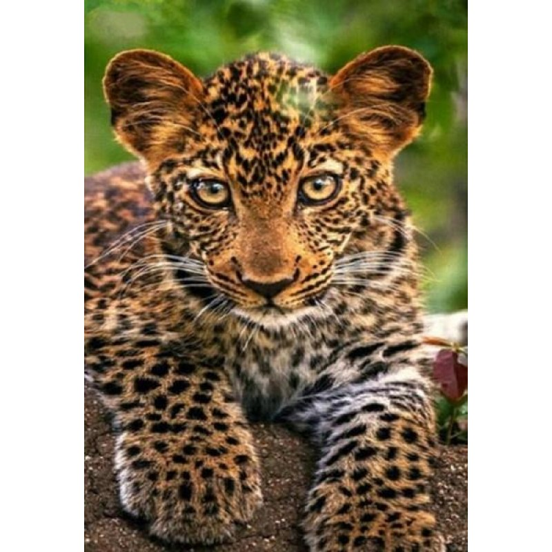 Adorable Leopard Cub...