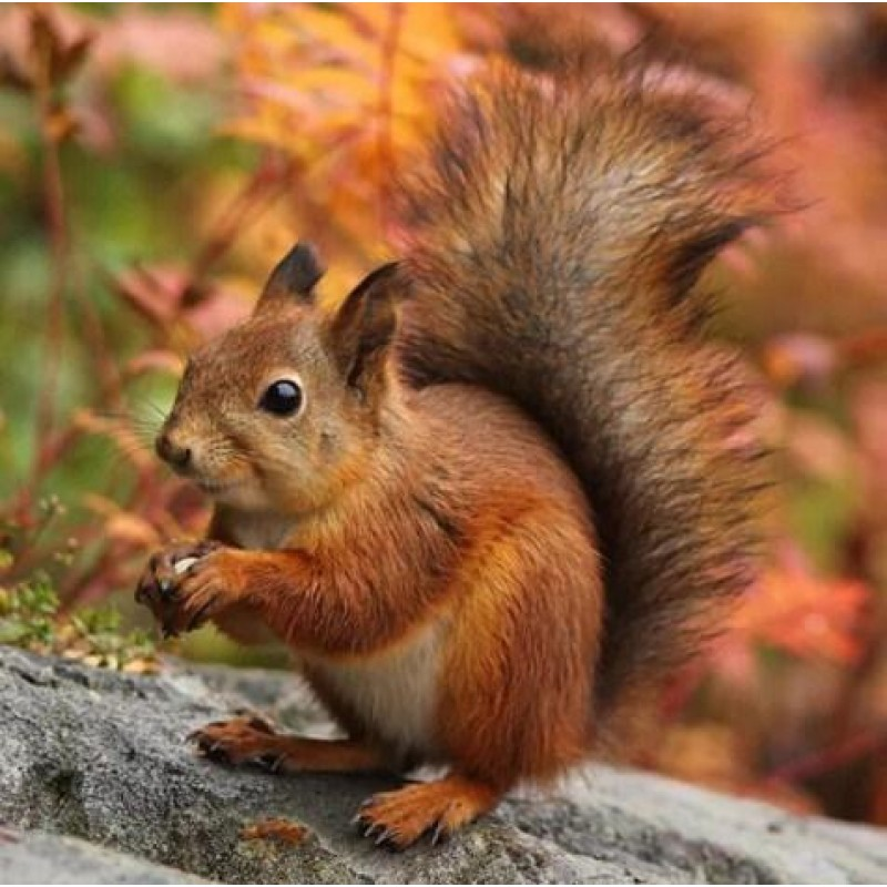 Adorable Squirrel Di...