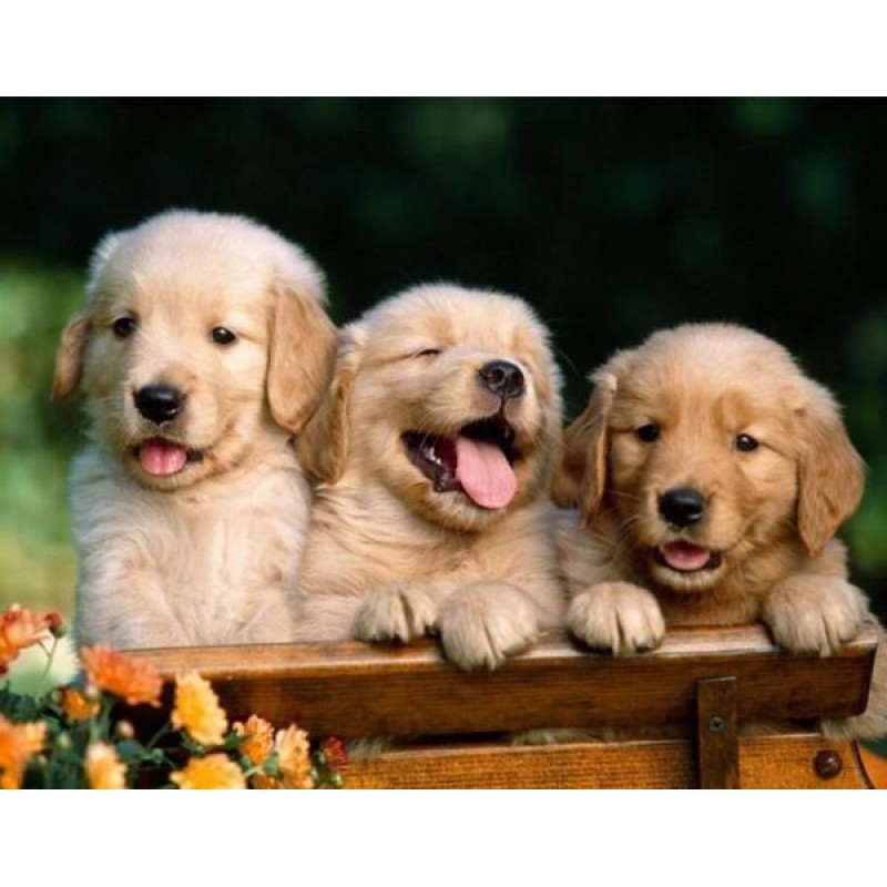 3 Cute Puppies Diamo...