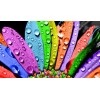 Water Drops on Colorful Flower Petals