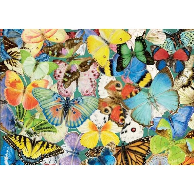 Colorful Butterfly S...