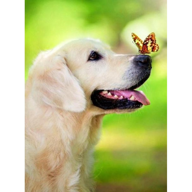 Dog with Butterfly o...