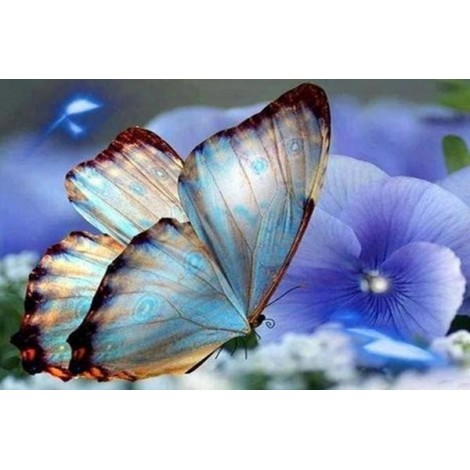 Blue Orchids & Butterfly