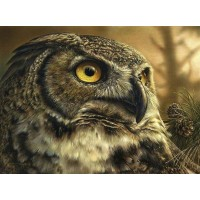 Owl Beauty Diamond Painti...